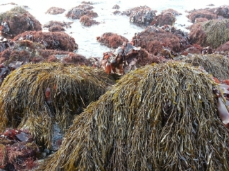 청정바다 해조류 톳,다시마,청다래