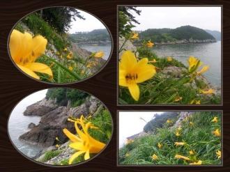 동고지마을의 6월, 원추리꽃